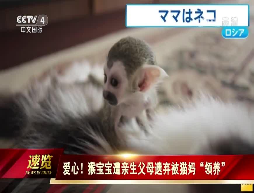 """爱心!猴宝宝遭亲生父母遗弃被猫妈""""领养"""""""
