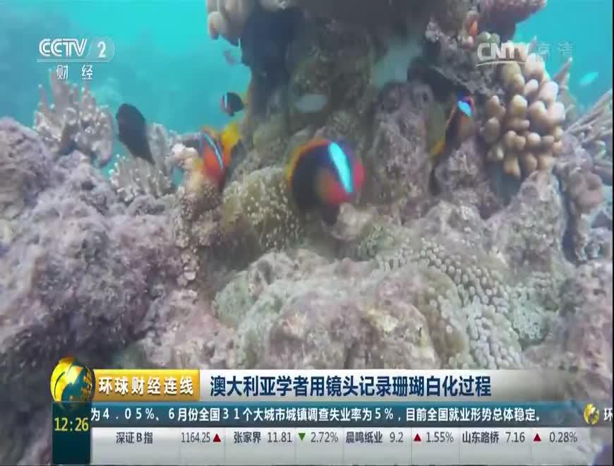 澳大利亚学者用镜头记录珊瑚白化过程