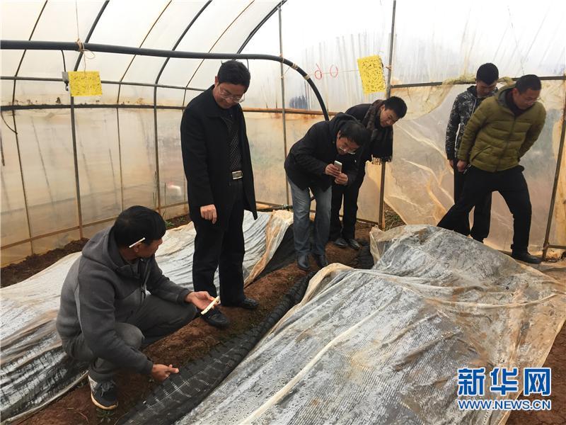 【网络媒体走转改】麒麟区东山镇:致富能手带领村民奔小康