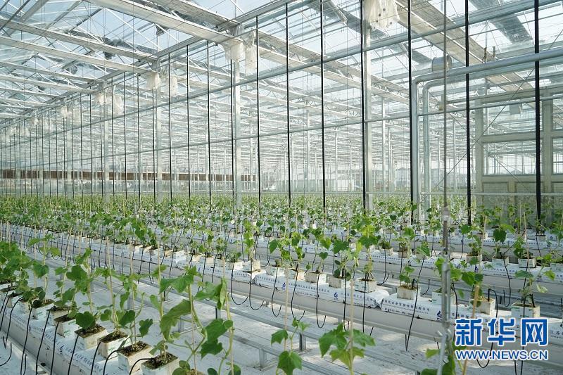 江西广丰:打造现代农业发展新引擎