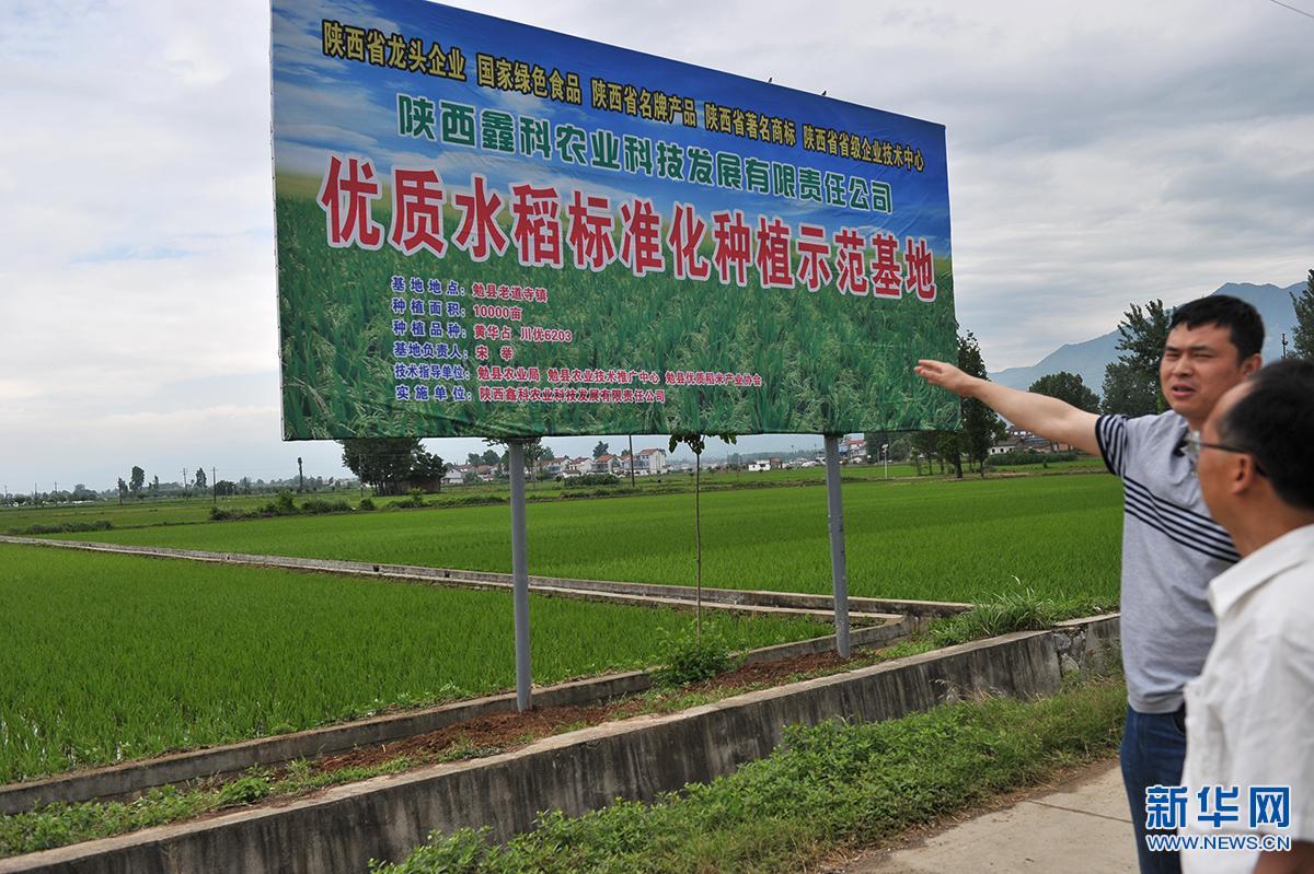 """""""公司+农户+科技""""新模式 提高农户种粮积极性"""