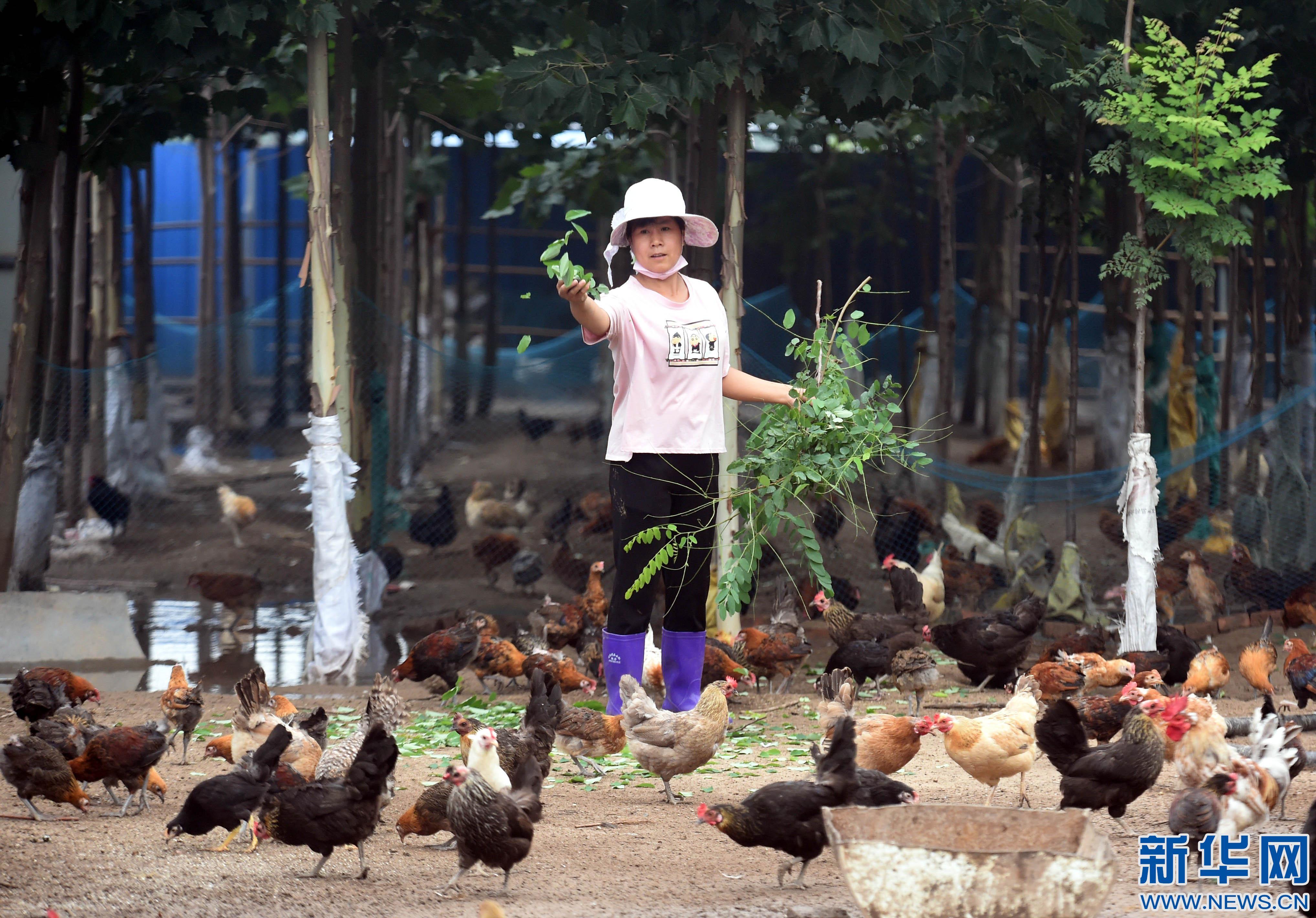 河北永清:立体生态养殖进农家