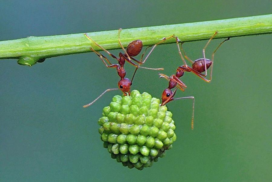 蚂蚁惊人的团队力量图片