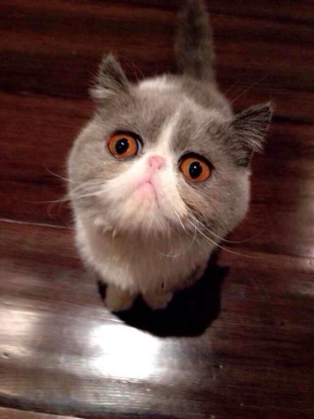 生气猫咪简最好表情笔画包滚没图你事图片