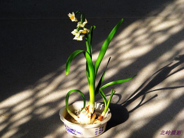 十大名花欣赏 3