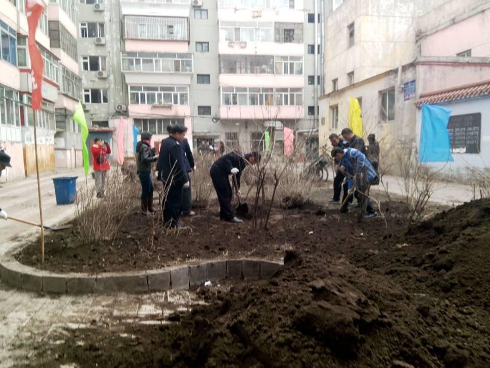 社区种植丁香树活动 - 新华博客 - News Blog