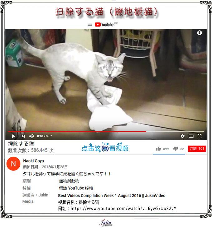 【冷笑画】(273+)《陈靖的Tiger猫》【睇片】《擦地板貓》by Julia诗清话逸