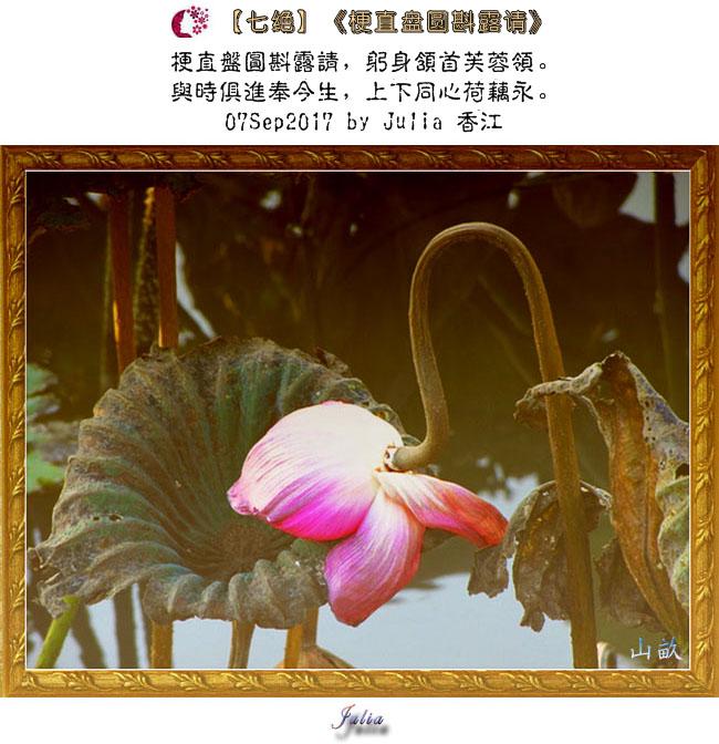 【步韵和诗·东土之韵·14-11】(731)【醉花阴】《残荷》【七绝】《梗直盤圓》