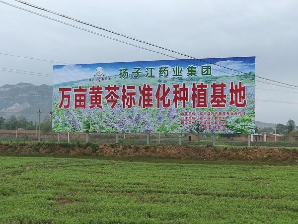 扬子江药业:制药领头羊,争当精准扶贫急先锋