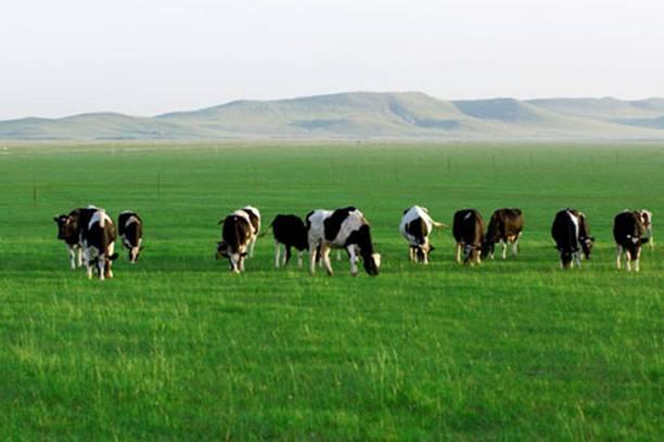 建国70年,中国奶业转型记——技术赋能驱动产业变革