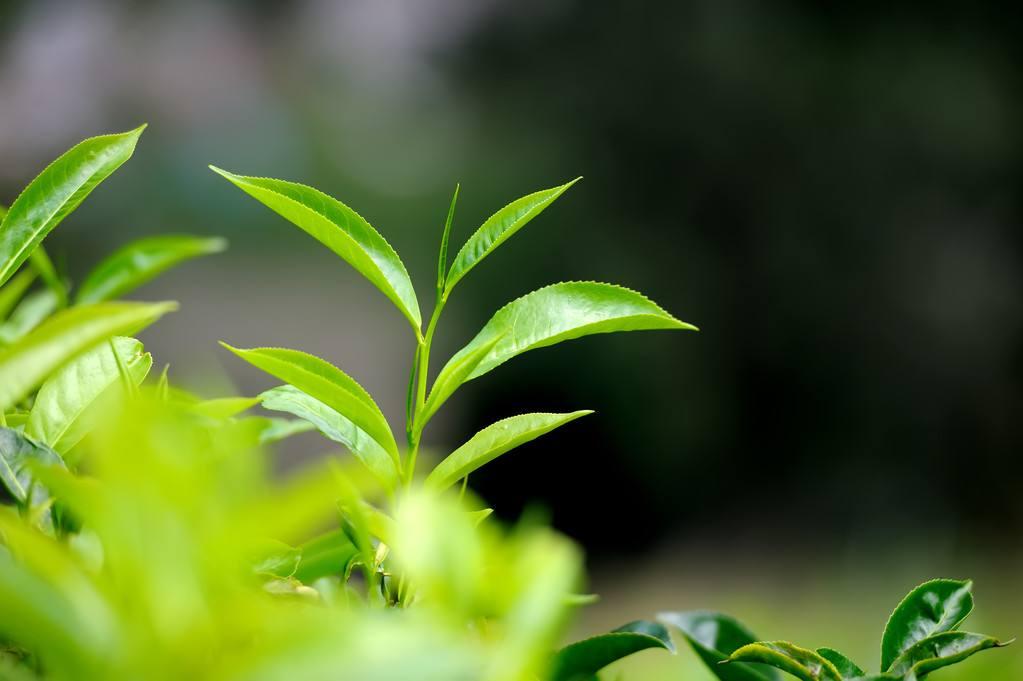 第二届中国茶产业峰会在福建顺利召开