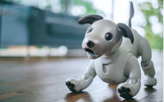 索尼机器人AIBO可为住院儿童进行心理康复治疗?已开始实证试验