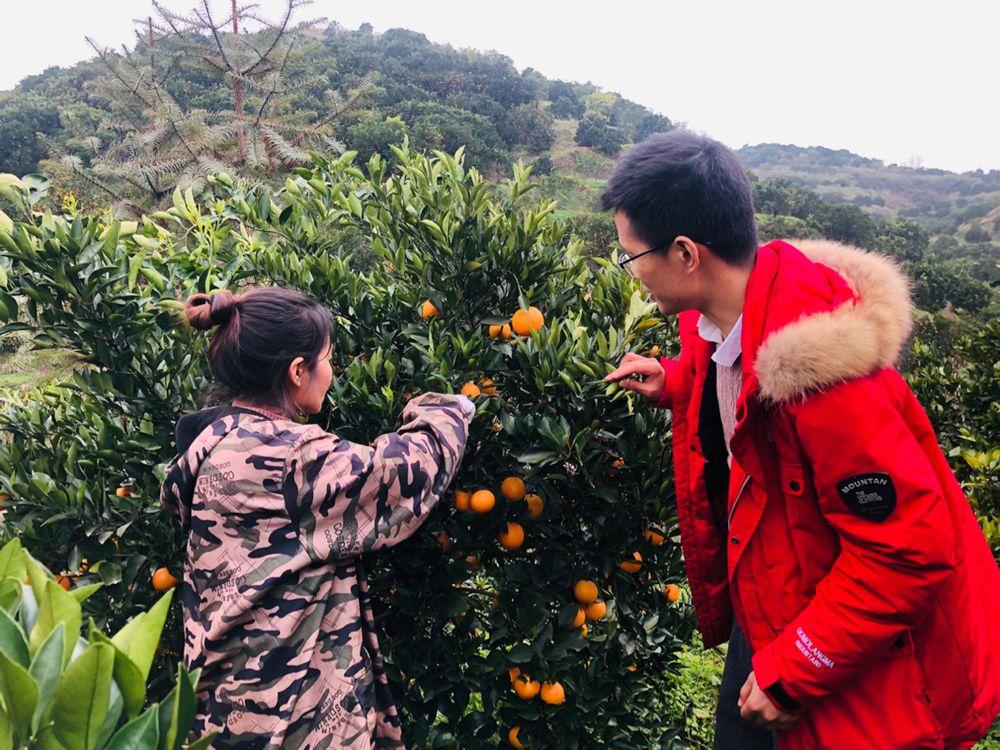 """90后大学生回乡变身""""电商学霸"""",3年卖出千万斤麻阳冰糖橙"""