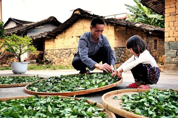"""福建安溪成立""""茶产业新品牌联盟"""" 助推传统茶产业升级"""