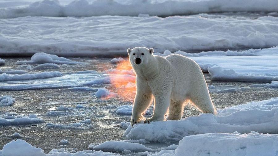 北极熊被困破碎浮冰 极地旖丽风光折射残酷现实