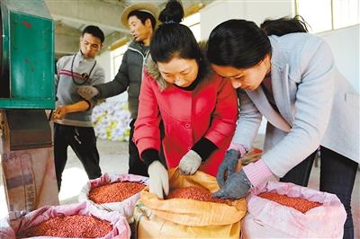 驻琼结县拉玉乡强吉村工作队正在村民尼玛旺姆家中检查种子包衣和春耕备耕情况。