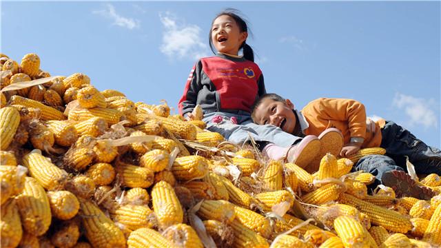 铁岭粮食综合产能登上45亿公斤新台阶