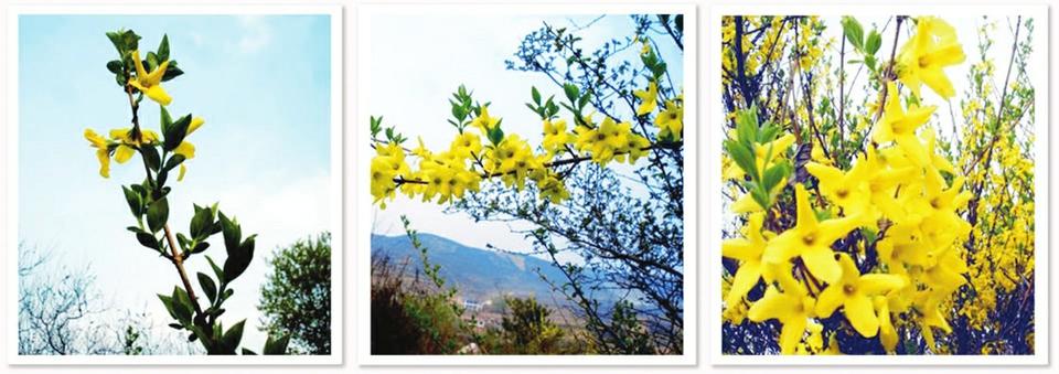 踏青好时节 山西从南至北这些赏花地可别错过!