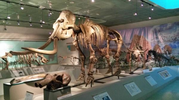 大连自然博物馆将举办外来入侵植物展