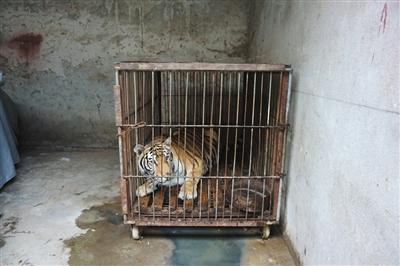 马戏之乡 被指虐待动物 回应:不可能,靠这个吃饭