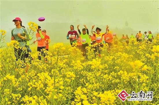 """2017罗平花海马拉松:4000名跑友共享""""最美赛道"""""""