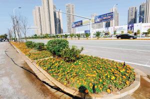 昆明呈贡景观提升蝶变鲜花之城