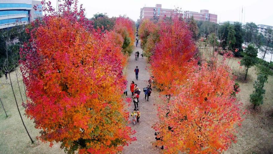 长沙东湖红枫节开幕 游客记录最美秋色