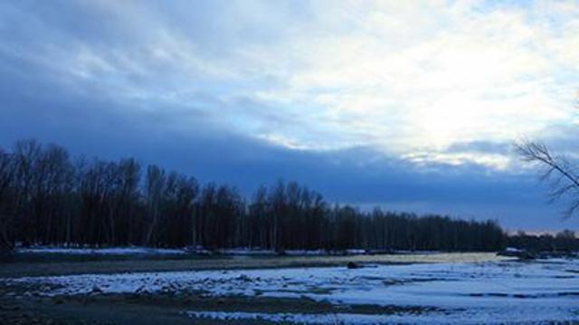 新疆哈巴河初冬白桦林如水墨画卷