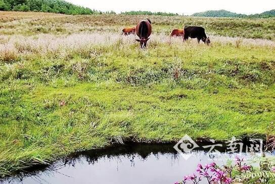 云南拟投资107亿元建哀牢山国家公园