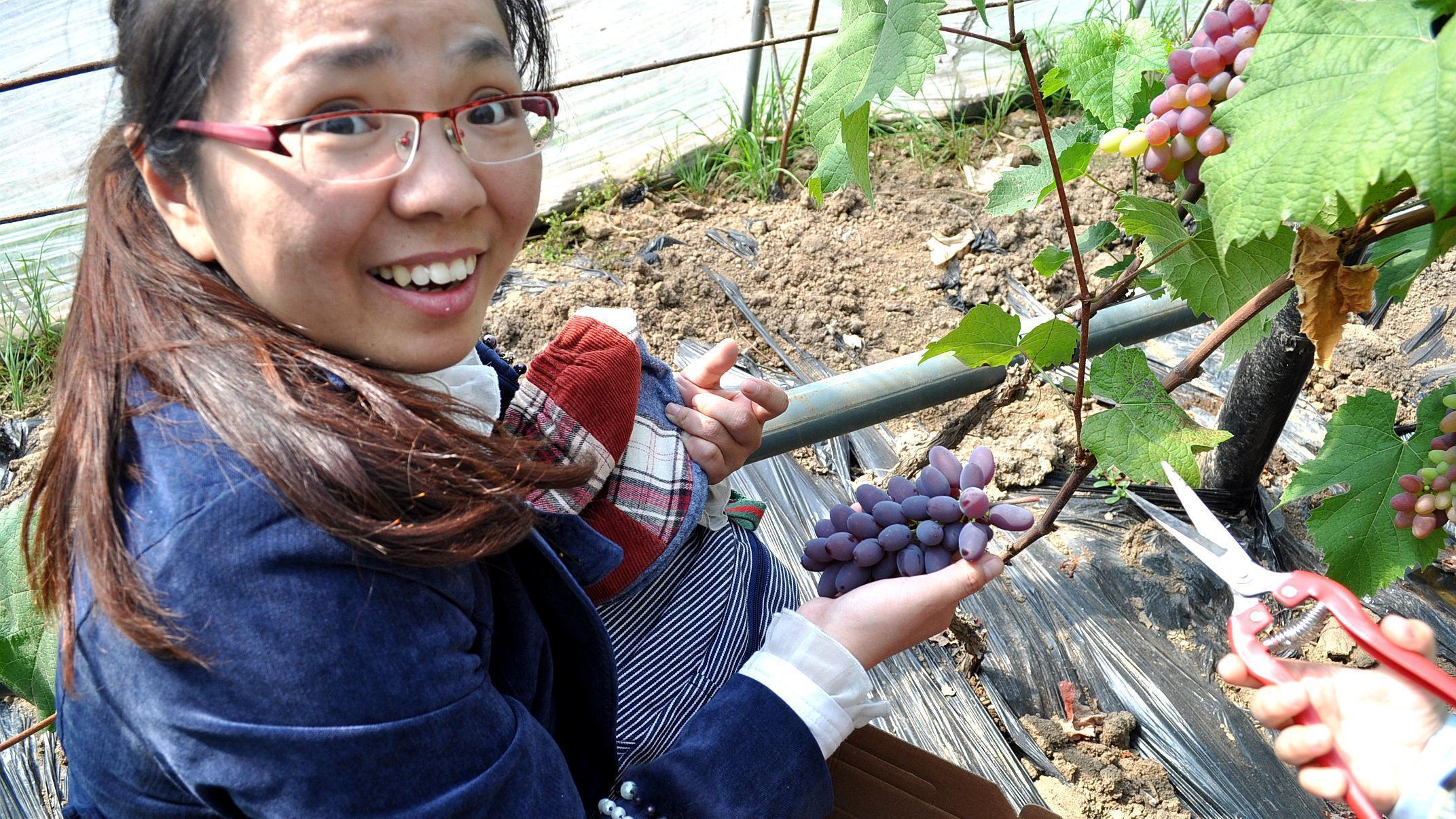 凤城大梨树 | 带你看中国美丽乡村的首届葡萄文化节