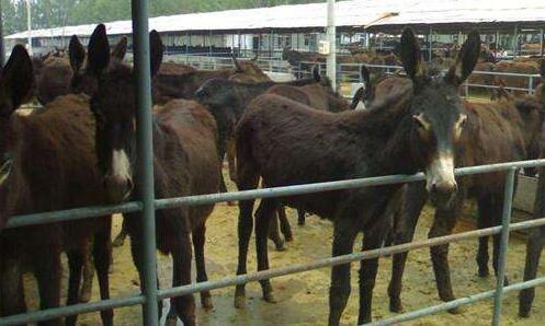 法库建设100个毛驴养殖专业村