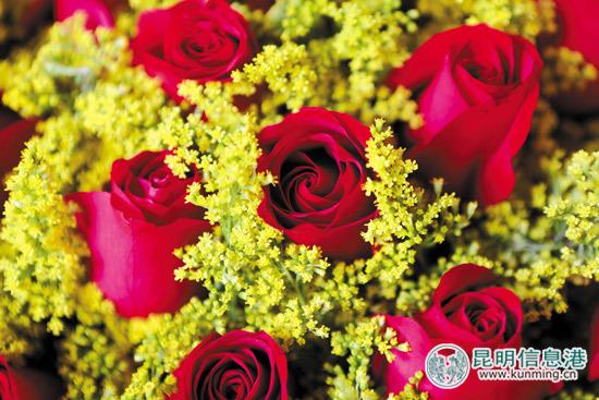 情人节将至 呈贡斗南花市玫瑰最贵卖到3元一枝