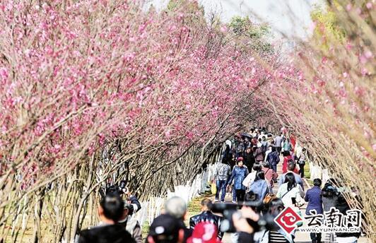 昆明动物园樱花节 10大亮点等你来玩
