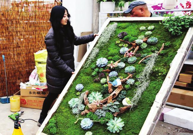 90后女孩用多肉植物做成风景画