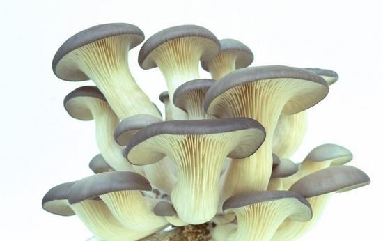 一种菌菇含抗癌物质,这样吃最佳