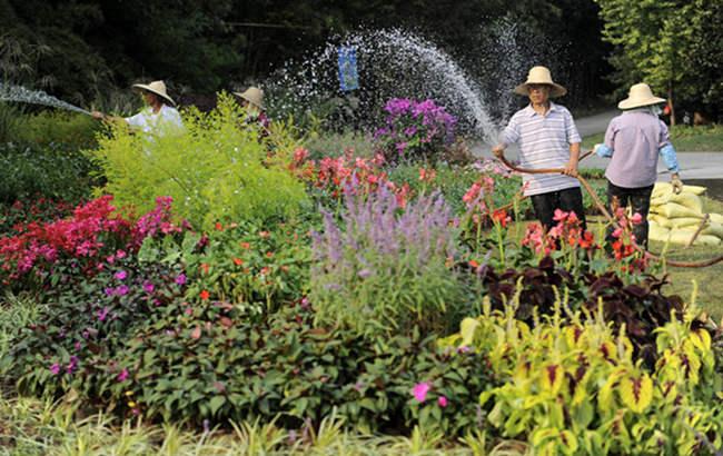 合肥首届植物花境大赛国庆亮相植物园