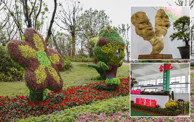 安徽省第七届花卉博览会在阜阳开幕 展出规模达10万㎡