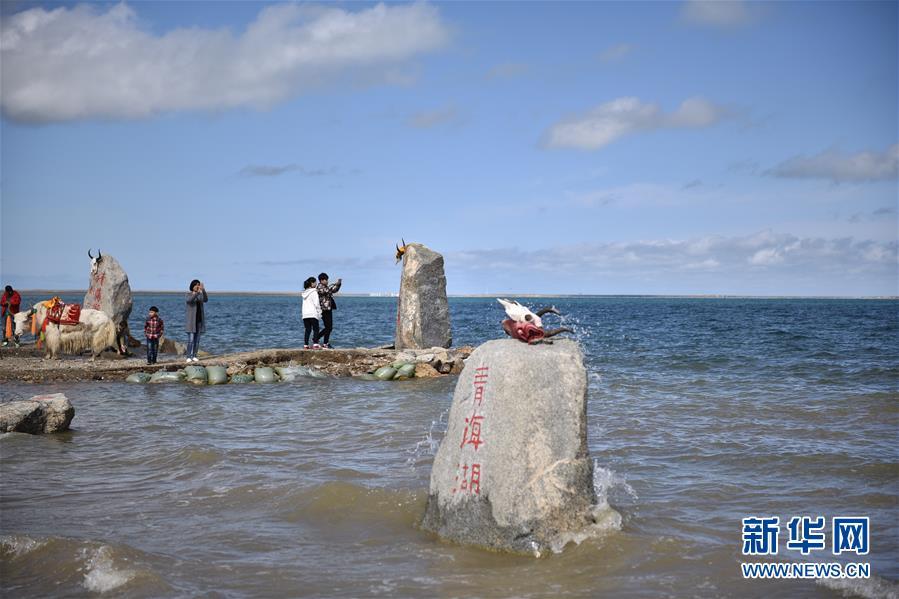 青海湖美景醉游人