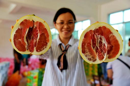 广西毛南山乡红心香柚上市