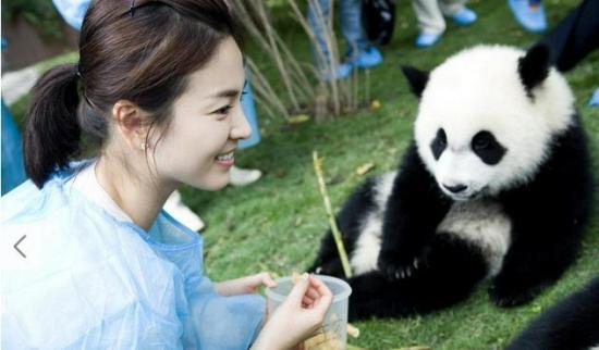 熊猫宝宝,而这只可爱的baby自顾自的吃东西呆萌可爱的样子十分抢镜.