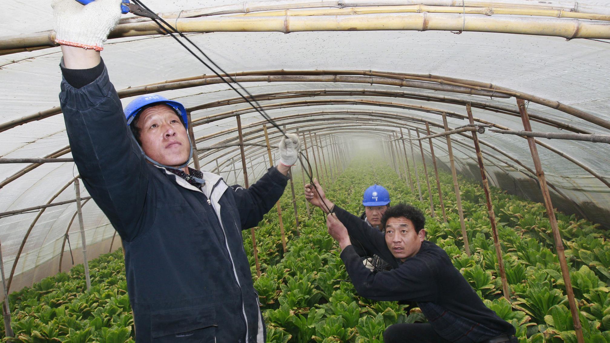 """(抚顺公司)草莓乡的""""雷锋式""""供电服务"""