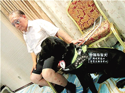 """郑州导盲犬""""多拉""""走出河南 服务外地盲人"""