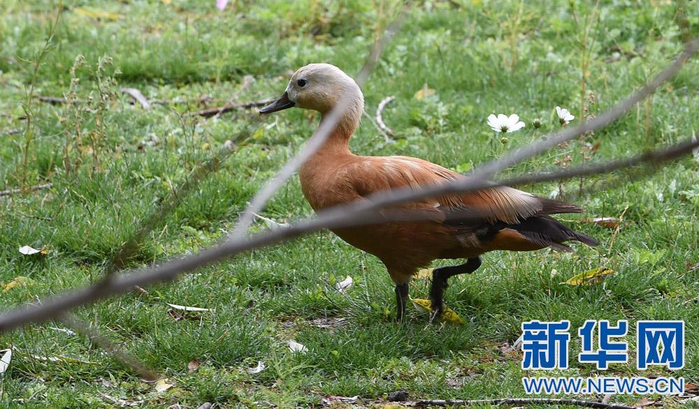 扎什伦布寺旁的野生动物