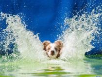 精彩的狗跳水比赛