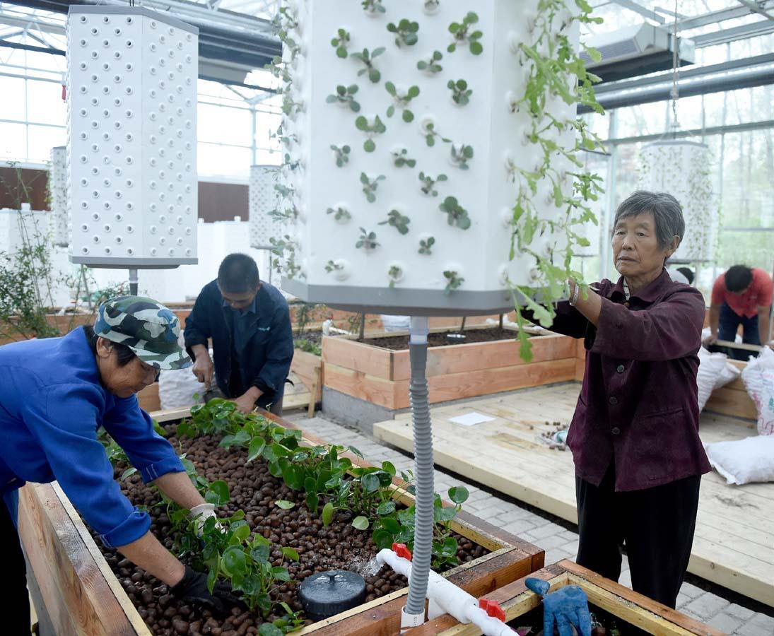 创新生态农业 带动村民致富