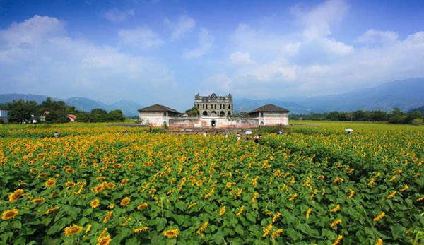 下莲塘的金葵花已吸引众多游客前来参观