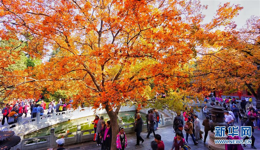 北京:红叶引游人