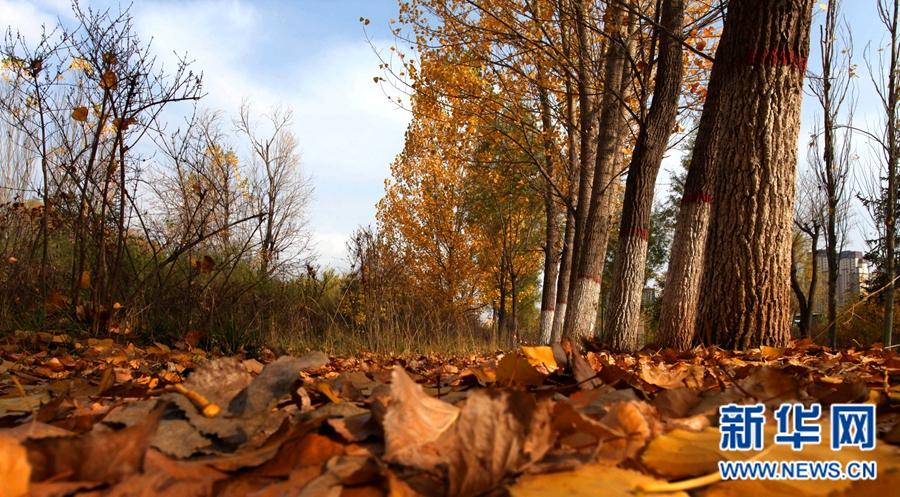 西宁湟水河畔话秋景
