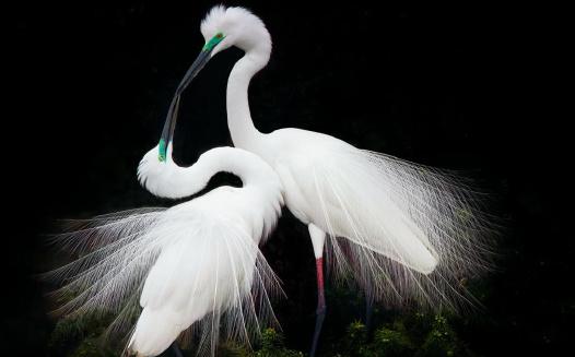 中国最美的鸟照花落谁家?