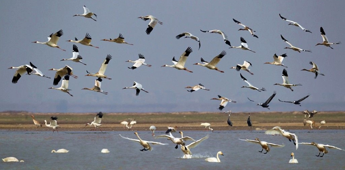 8部门印发《耕地草原河湖休养生息规划》